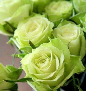Buchete-de-trandafiri-verzi