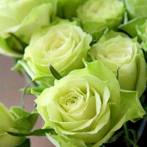Top 3 situatii in care ii poti surprinde pe cei dragi cu buchete de trandafiri verzi